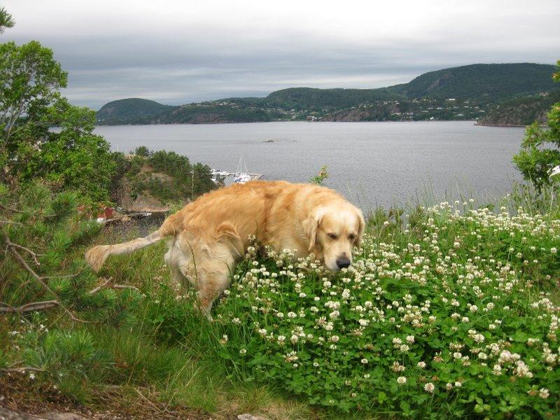 Jonas ved Drammensfjorden