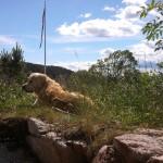 hund i gress